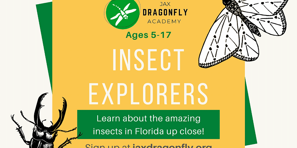 Insect Explorers | Fun Fridays | 10am