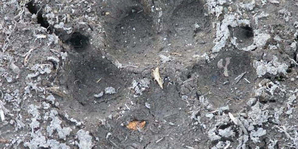 Animal Tracks | Arlington Explorers