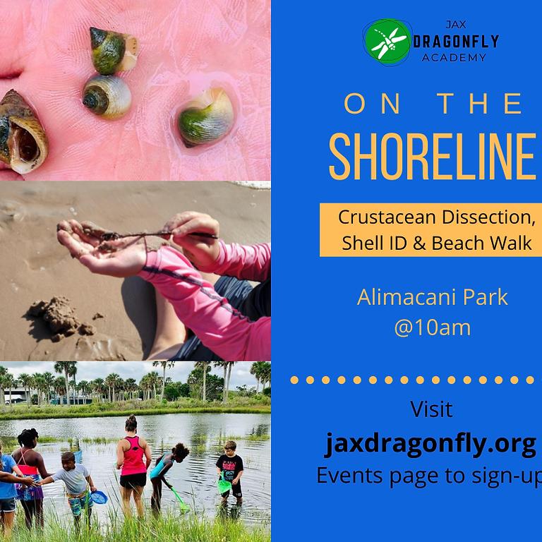 On the Shoreline | 8/13
