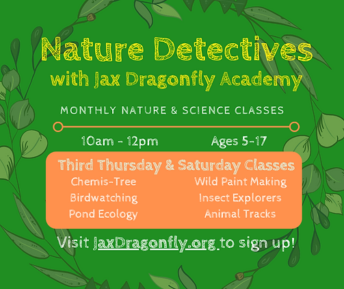Nature Detectives with Jax Dragonfly Aca