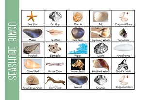 Seashell Bingo.png
