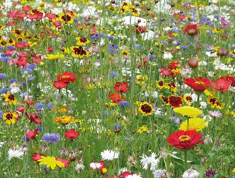 ob_2d1700_les-fleurs-sauvages-belles-et-