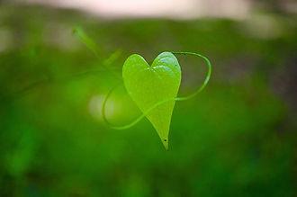 coeur vert.jpg