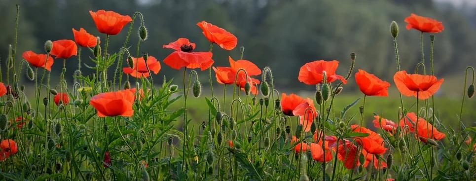 fleurs 6.webp