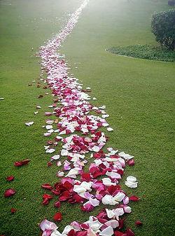 chemin de roses.jpg