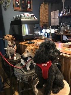 pub dogs.jpg