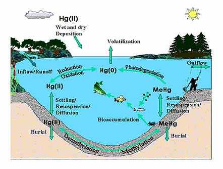 asiamercury liquid mercury cycle.jpg