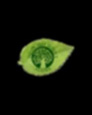 PTS Logo - EBO Website.png