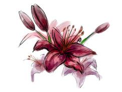 Oakland Flower