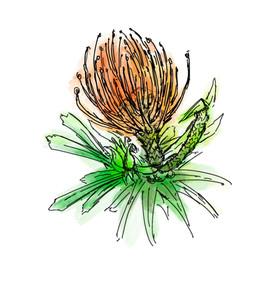 Berkeley Flower