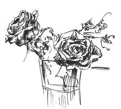 Maxwells Roses
