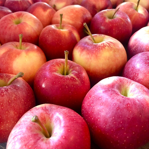 Gala Apples - 8 Count