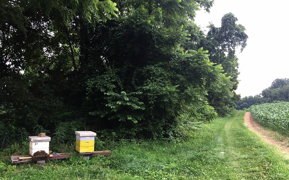 Bee hives on location at the farm
