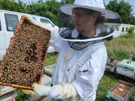 INTRODUCTION TO THE BEES