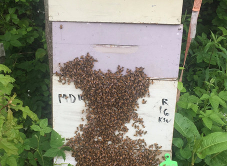 ARE YOU INTERESTED IN BEEKEEPING