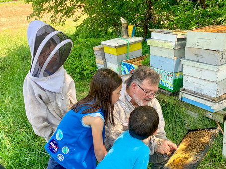 Girl Scouts Meet the Bees!
