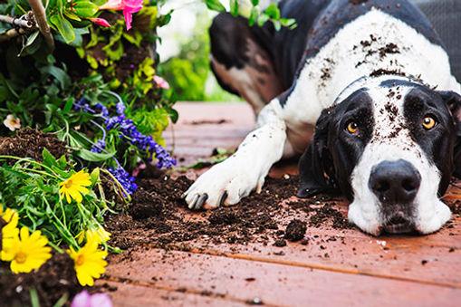garden_desktop.jpg
