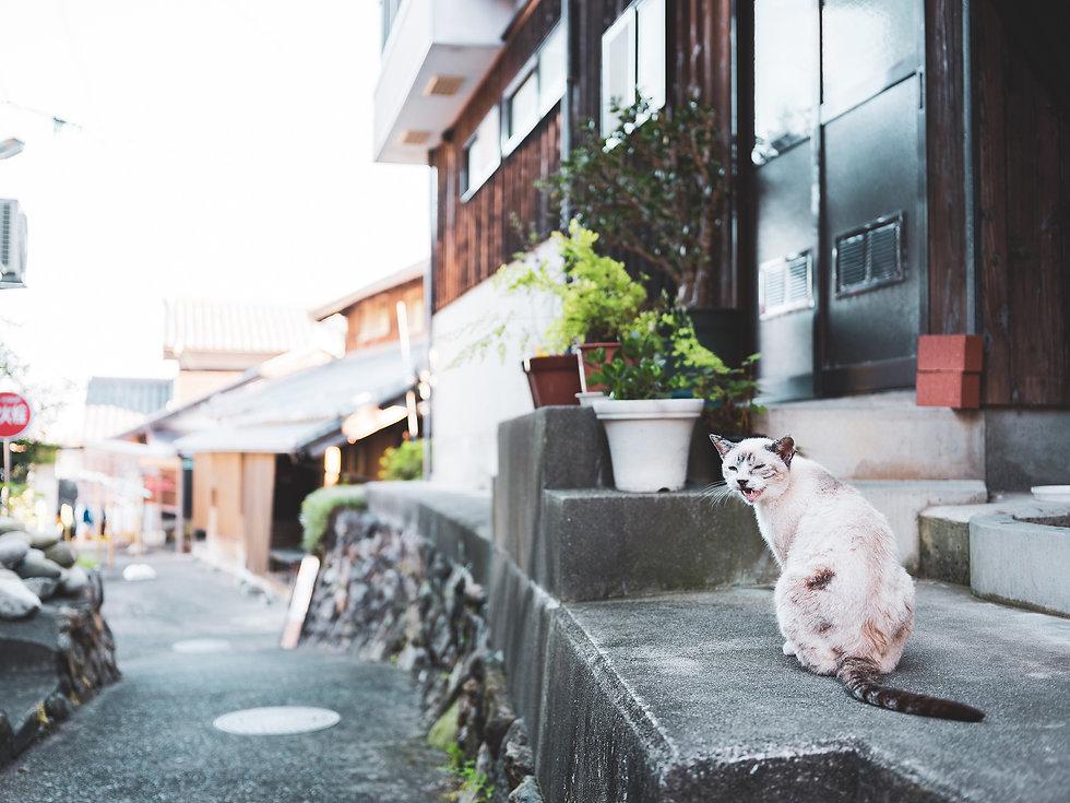 shitsumi_cat_20200912-DSCF2230.jpg
