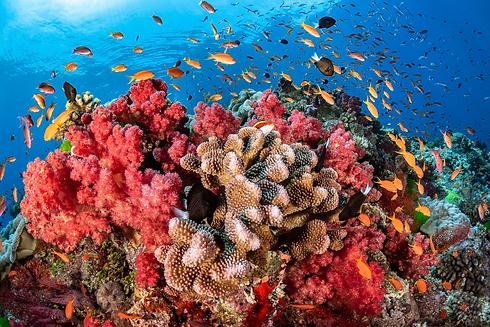 coral-reefs-2728211.webp
