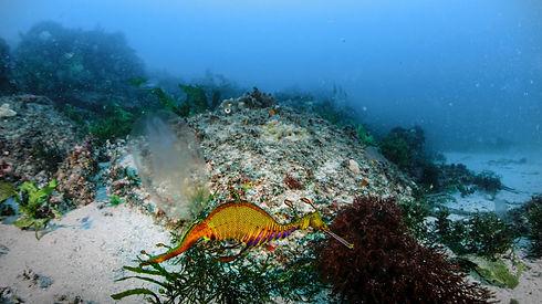 oceancurrents-still-2.jpg