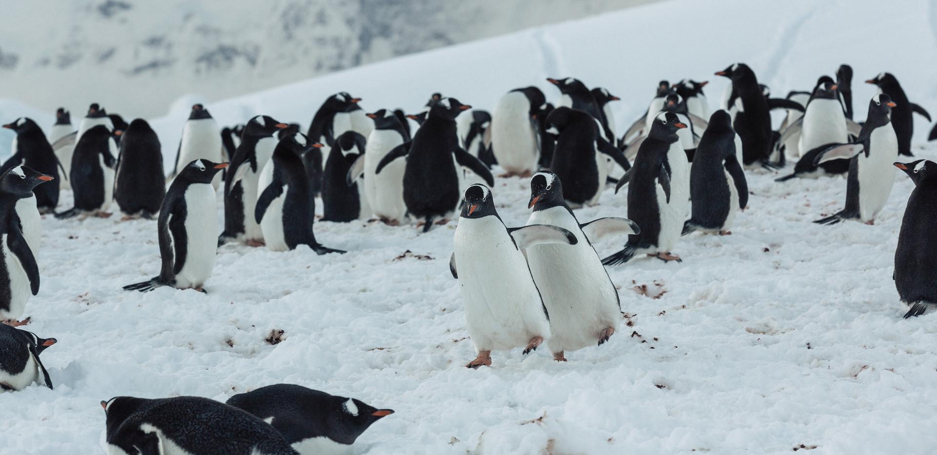 Antarctica (119 of 200).jpg