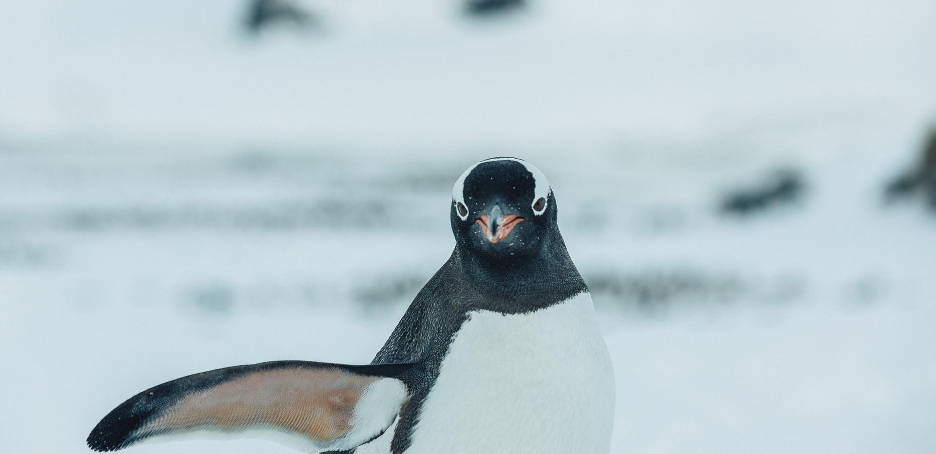 Antarctica (127 of 200).jpg
