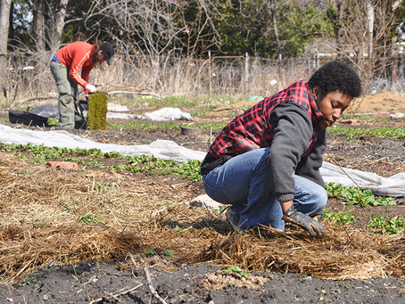 Rust Belt Cities Go Green to Aid Urban Revival