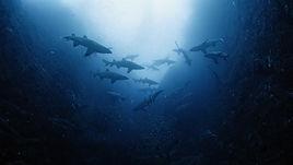 oceancurrents-still-1.jpg