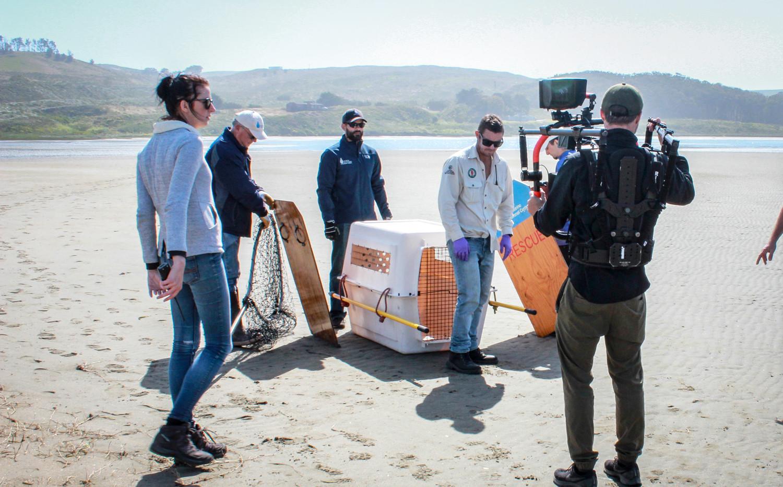 Sea lion release in California