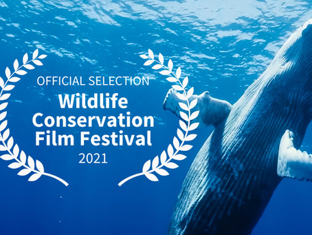An Official Selection at the Wildlife Conservation Film Fest!