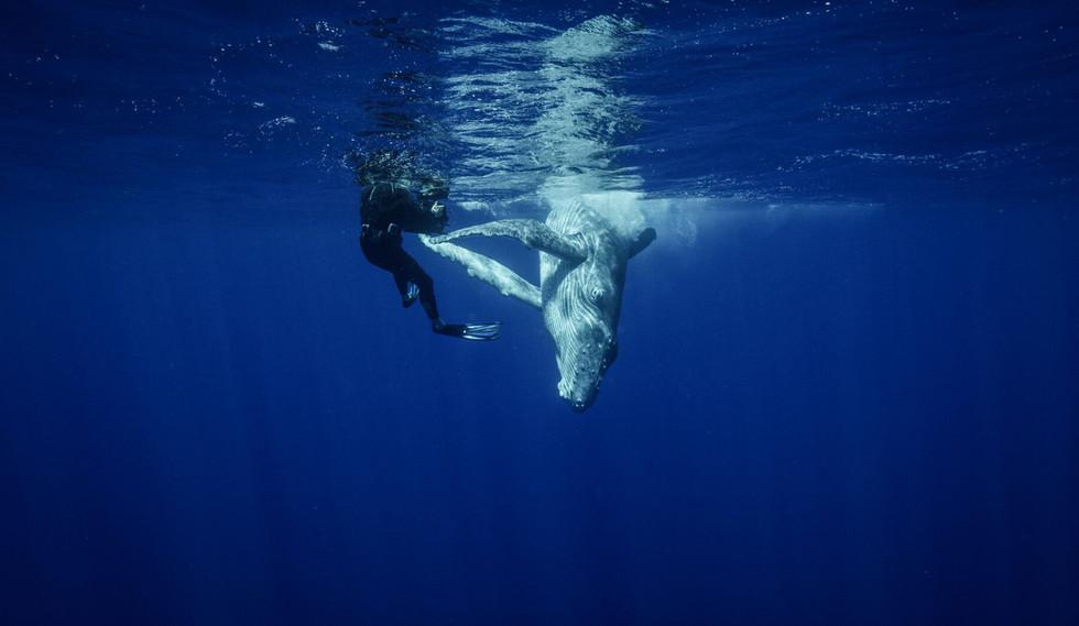 Jon filming humpback