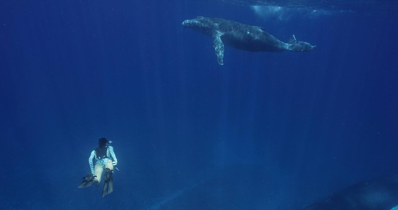 Amelia swimming with humpback