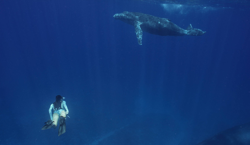 Amelia swimming with humpback