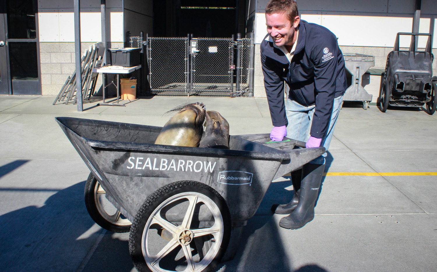 Dirk rescuing a sea lion at MMC