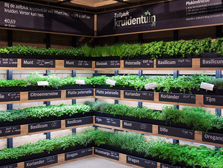 In-store herb farming takes off in the Netherlands