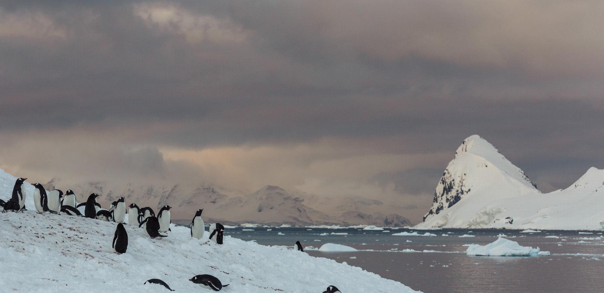 Antarctica (121 of 200).jpg