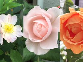 『Staff Blog Vol.2』〜初夏の花〜