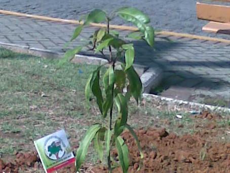 Plantio arvores em Guaratinguetá - SP