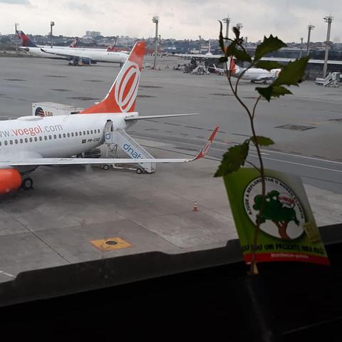 Distribuição de mudas de árvores no Aeroporto de Guarulhos - SP