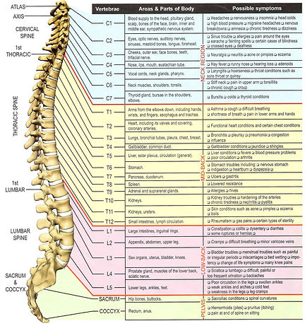 spine-and-nerve-chart.jpg