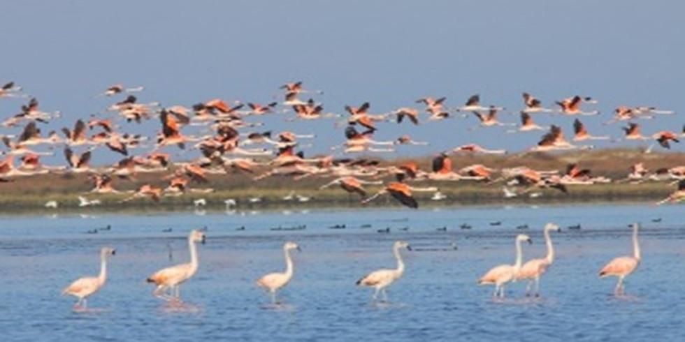Parque Nacional Lagoa do Peixe (Ano novo)