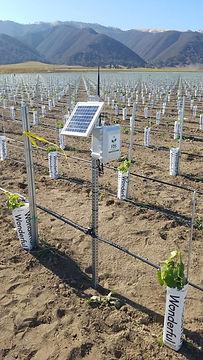 Crop Monitoring1.jpg
