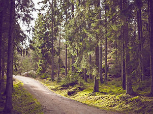 Waldweg-