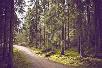 Nordic Walking Nahalie Meyr bewegt in Weisslingen