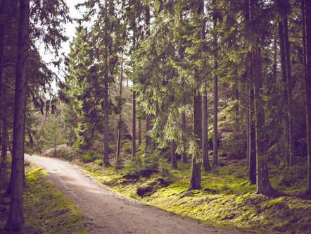 Unterwegs im Grünen - Waldgottesdienst in Waldhausen