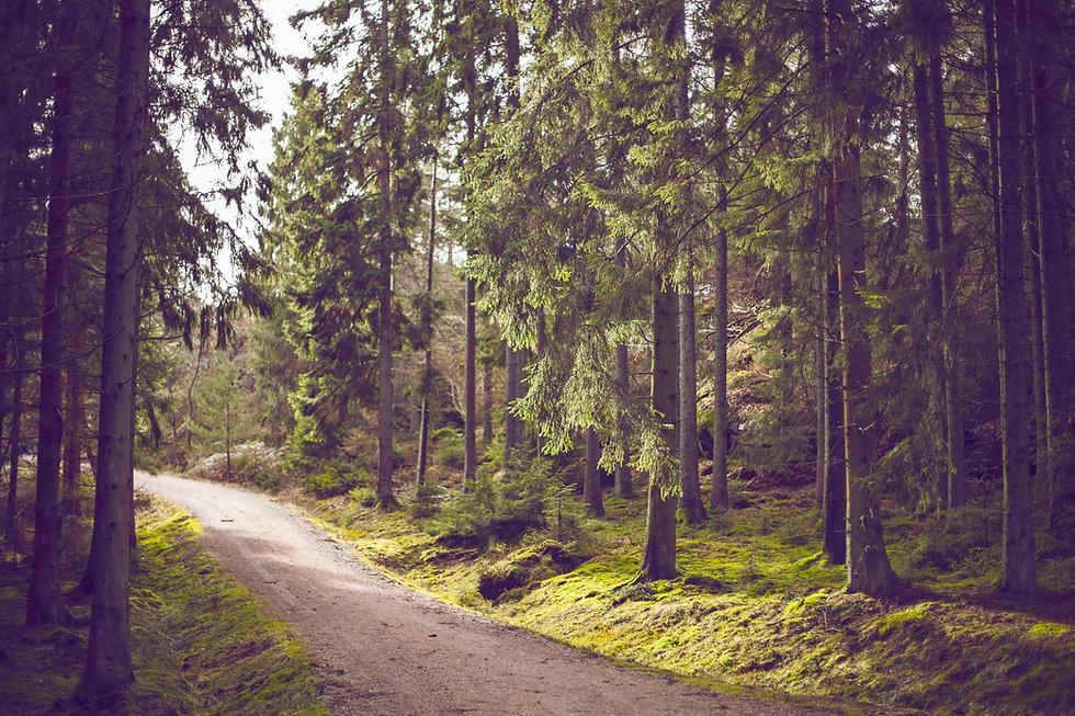 Trajeto da floresta