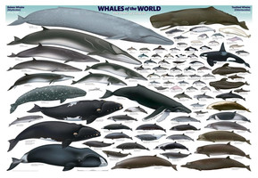 WHALES WORLD