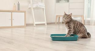 kittybox.jpg