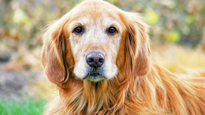 Ageing and the Mature Pet