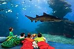 Palma_Aquarium-Canguro_Tiburón.jpg